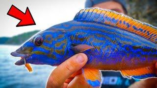 FISHING AQUARIUM FISH IN SWEDISH SEA Team Galant