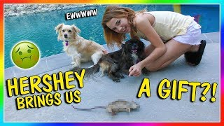 Video HERSHEY BRINGS ME A GIFT | We Are The Davises download MP3, 3GP, MP4, WEBM, AVI, FLV Agustus 2018