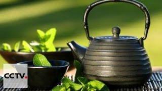 Чай - история одного листа Серия 4 Чужая земля,родная земля часть 2