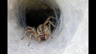 Дикая Природа - Ядовитые пауки и насекомые (BBC)
