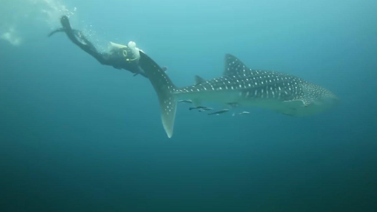 14 Animales Más Bizarros Que Viven En Los Volcanes