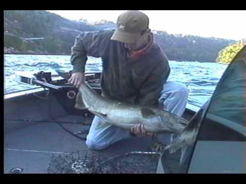 Salmon lower niagara get reel fishing youtube for Lower niagara river fishing report