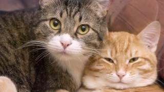 Животные помогают человеку восстанавливать здоровье