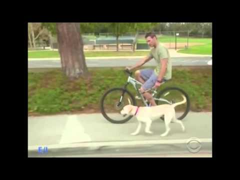 On Popular CBS TV , Lucky Dog,  Sawyer learns biking with the Bike Tow Leash