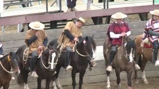 Vdeo Rodeo 2019