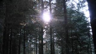 Johnnytwentythree - Holy Ghost People