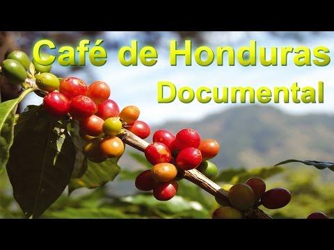 Café de Honduras Historia Regiones Geográficas y Variedades de Cafe  Documental Completo