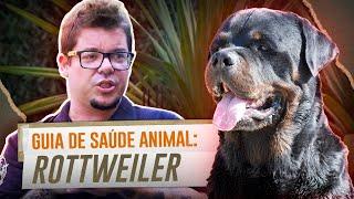 CUIDADOS COM A SAÚDE DE UM ROTTWEILER   GUIA DE SAÚDE ANIMAL