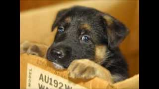 Potty Training German Shepherd Puppy - German Shepherd Potty Training Information & Tips