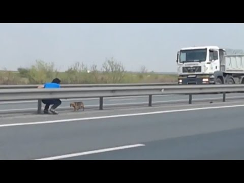 Thumbnail: Man Risks Life To Save Abandoned Dog Stranded In The Middle Of Busy Highway