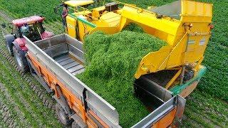 Picking Green Beans | New Ploeger BP2140e Bean Picker  | Laarakker Well | Haricot Verts
