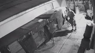 Burglar, Homeowner Exchange Gunfire During Parrot Theft