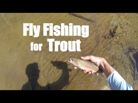 Fly Fishing for Trout Pennsylvania