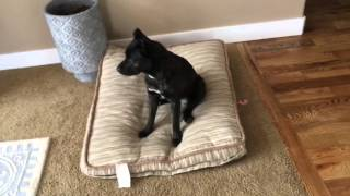 How To House Train (Housebreak) Your Puppy or Dog