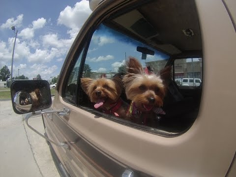 Enclosed trailer rv build update, yorkie spa day and Lowes
