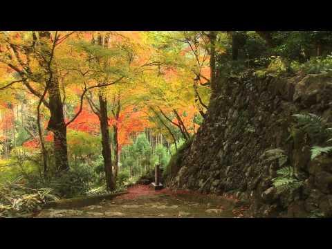 Kyoto Autumn Color