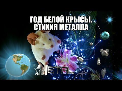 Поздравления с  Новым Годом в стихах! 2020 год - год Крысы!