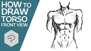 How to Draw Torso from Front View │ Drawing Tutorial