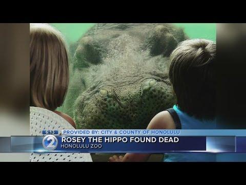 Hippopotamus found dead at Honolulu Zoo