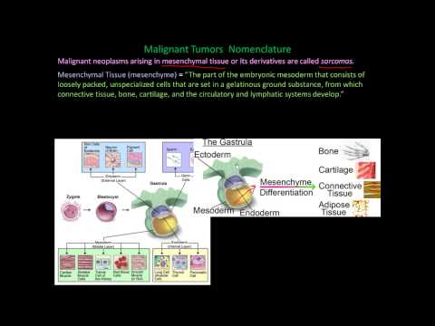 112P - Nomenclature of benign and malignant cancers, How to name cancers, mixed tumors explained