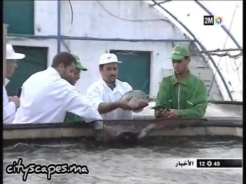 Pisciculture au Maroc -  استزراع الأسماك بالمغرب
