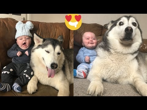 Husky Protects a Baby & It's Damn Adorable!
