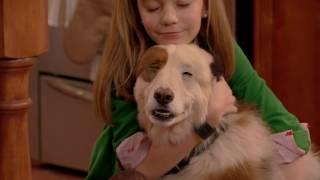 Собака точка ком - Сезон 1 Серии 1, 2, 3 - Смотри все серии подряд | Сериал Disney