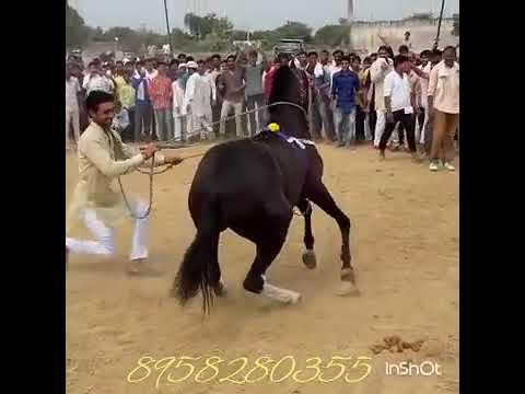 Geeta Rabari Kachi Koyal Sonu Tane Mara Par Bharoso Nai Ke