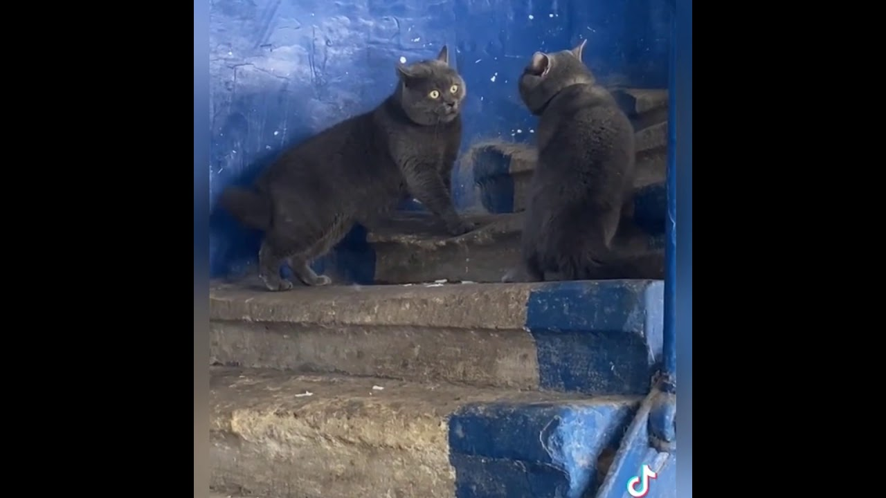 У Котиков Серьезный разговор 😂