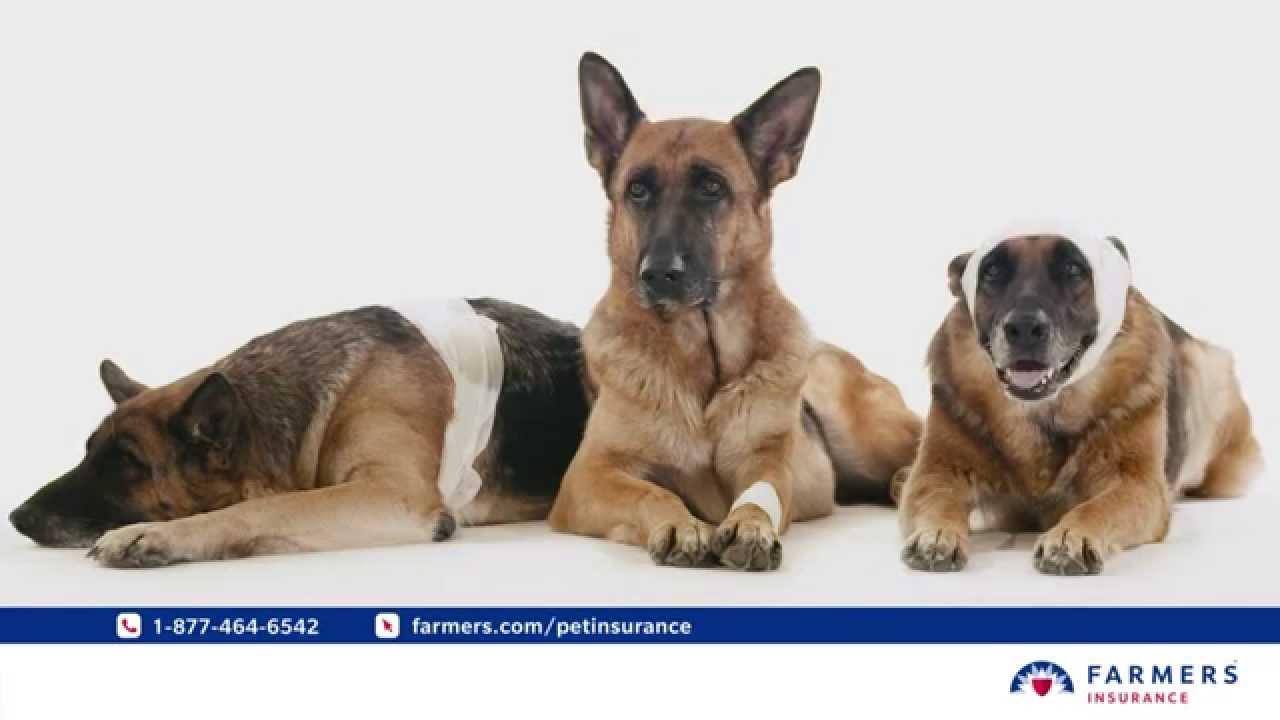 Best Dog Insurance >> Farmers Pet Insurance Street Smarts Youtube