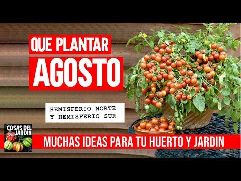 Calendario de Siembra Agosto - Que sembrar en Agosto 2020 + Tareas huerto y jardín
