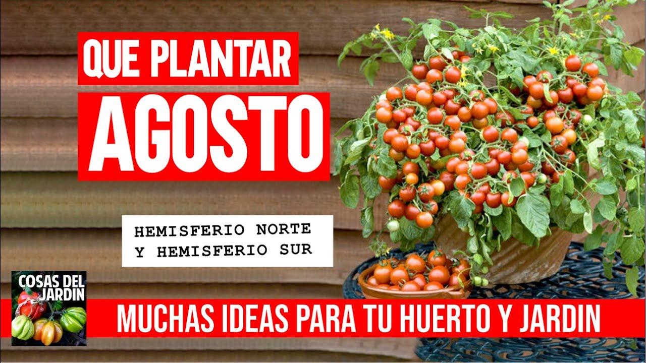 Calendario de Siembra Agosto 2020 - Qué sembrar + Tareas huerto y jardín
