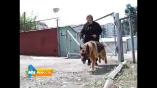 В Саратове - лучшие инструкторы и собаки службы Наркоконтроля