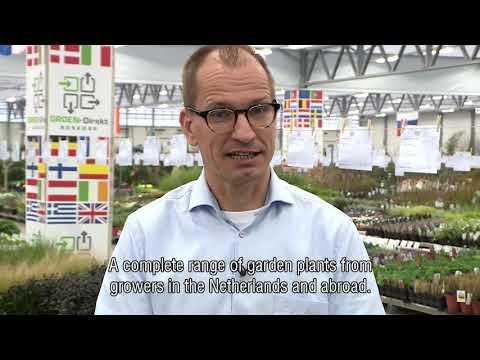 About GROEN-Direkt (English subtitles)