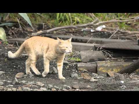 川崎 扇町の猫 2016/01/31