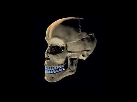 Skeletal System Rap Song -