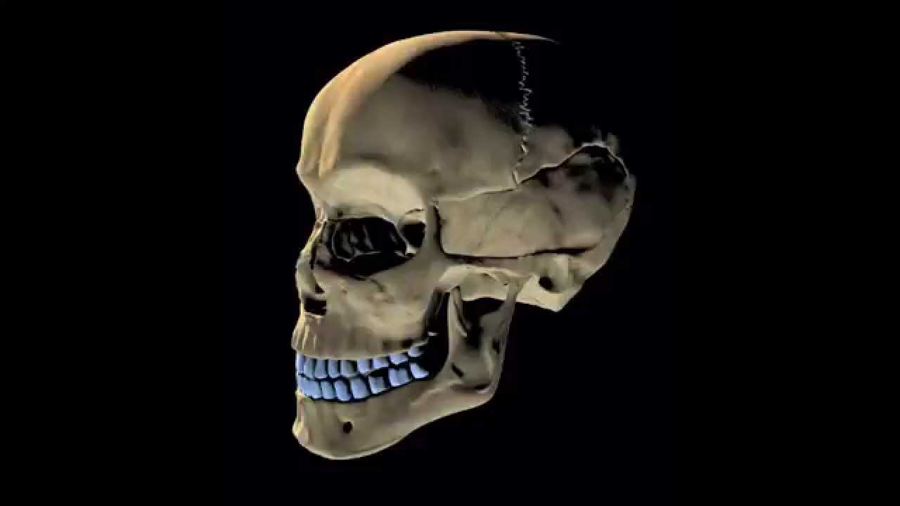 Skeletal System Rap Song I Got Bones Youtube