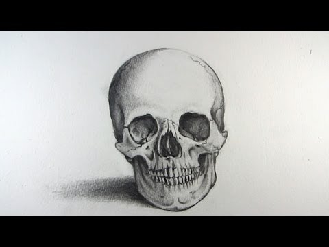 How to Draw a Realistic Skull: Narrated Step by Step
