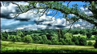 Nature Sounds Birdsong, Birds singing on a summer morning