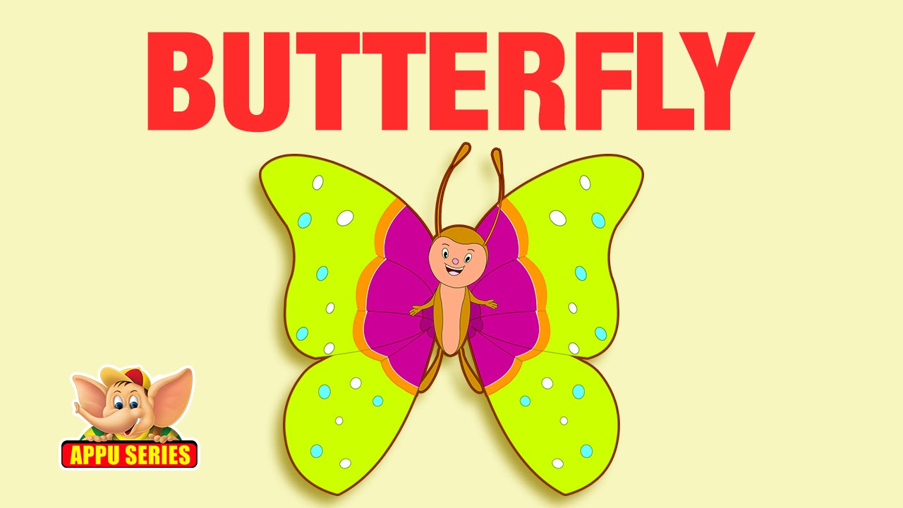 animal facts butterfly youtube