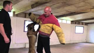 Ian Griffiths - Professional Dog Training -  Hd