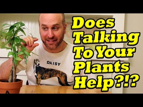 Plant Talk: Does talking to your plants help them grow?