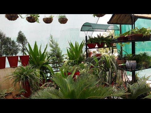 Summer Garden Overview || Fun Gardening || May Garden Overview