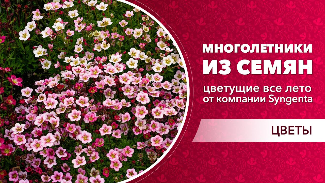 Многолетники, которые цветут все лето