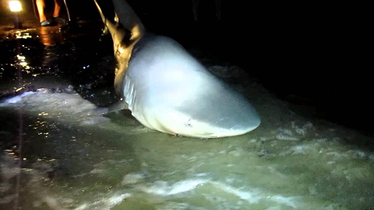Bull Caught River Shark