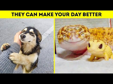 ?CUTE AND FUNNY ANIMAL? TO BRIGHTEN UP YOUR DAY | FUNNY ANIMALS COMPILATION 2020 #cuteplanet #animal