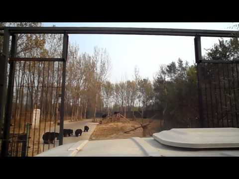 Beijing Wildlife Park - Safari part.1