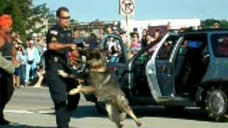 Disobedient Buffalo Grove Police Attack Dog