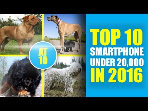 Top 10 World's Biggest Dog Breeds