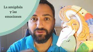 Download La amígdala y su papel en las emociones